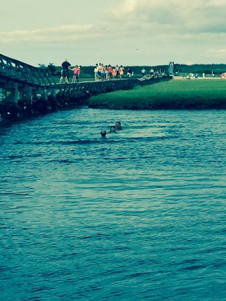 Sandwich, Town Neck Cape Cod vacation rental - Swimming in the creek at the Boardwalk
