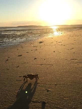 Wellfleet Cape Cod vacation rental - Peaceful Morning Walks on the Flats