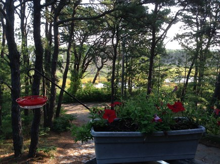 Wellfleet Cape Cod vacation rental - Restful view of ever-changing marsh from front porch