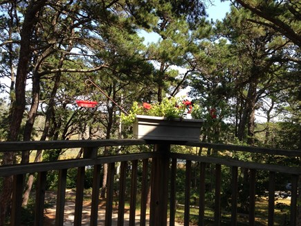 Wellfleet Cape Cod vacation rental - Watch hummingbirds and the marsh from front porch.