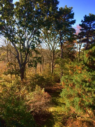 Orleans Cape Cod vacation rental - The deck overlooks woods, in front of a marsh.