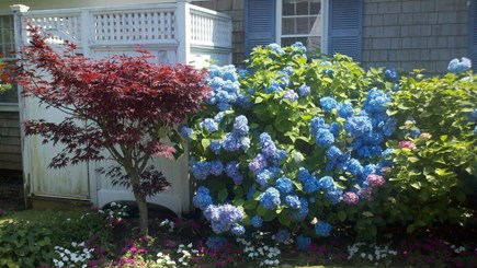 South Yarmouth Cape Cod vacation rental - Outdoor shower is surrounded by blooms.