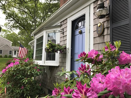 West Dennis Cape Cod vacation rental - Rhododendrons in front of house!