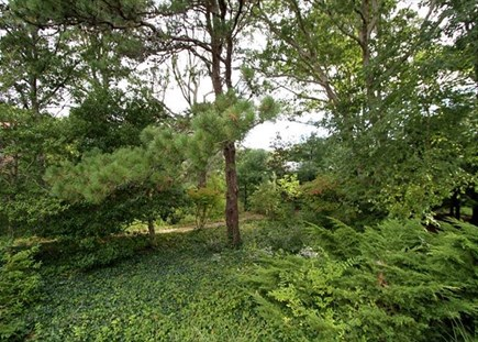 Yarmouth Cape Cod vacation rental - Private yard