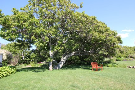 East Dennis Cape Cod vacation rental - Front yard area for summer fun