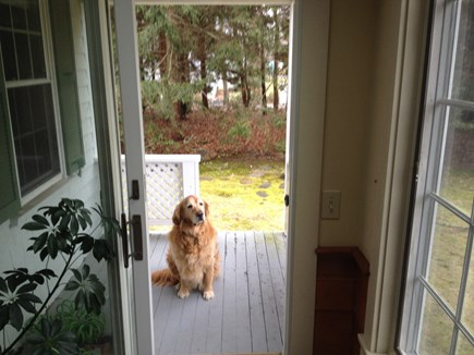 Falmouth, Teaticket Cape Cod vacation rental - Outside porch