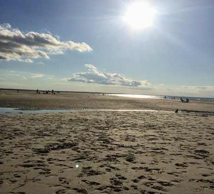 Dennis Cape Cod vacation rental - Beautiful Mayflower Beach at low tide. Just 1/3 mile away!