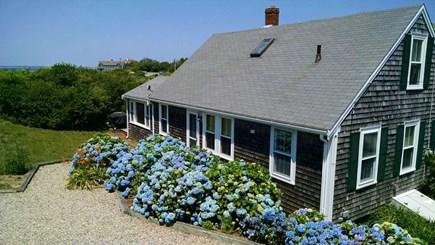 North Truro Cape Cod vacation rental - Beautiful Hydrangeas and surrounding grounds.