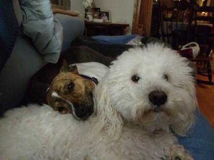 Marstons Mills Marstons Mills vacation rental - Mackie & Miss Lulu