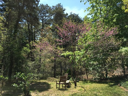 Wellfleet Cape Cod vacation rental - Back yard