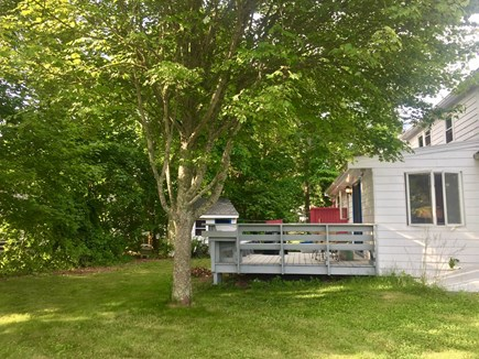 Falmouth, New Silver  Cape Cod vacation rental - Back yard, deck and outdoor shower