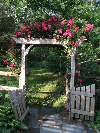 Eastham Cape Cod vacation rental - Rose arbor entrance to back yard