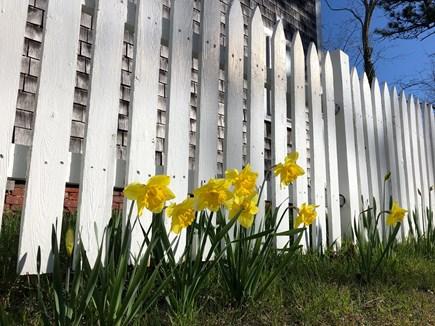 Wellfleet Cape Cod vacation rental - Happy Spring!