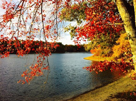 East Falmouth Cape Cod vacation rental - Our small beautiful lake in October