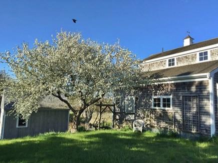 Chatham Cape Cod vacation rental - Cottage yard