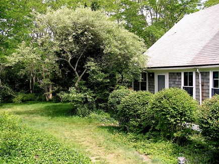 Wellfleet Cape Cod vacation rental - Front side showing vegetation