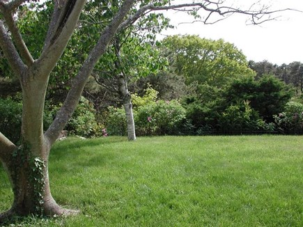 North Truro Cape Cod vacation rental - back lawn