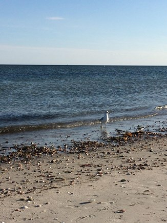 West Yarmouth Cape Cod vacation rental - Seagull Beach is just 1.5 miles away