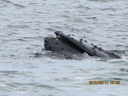 Hyannis Cape Cod vacation rental - Go on a Whale Watch trip out of Provincetown or Barnstable!