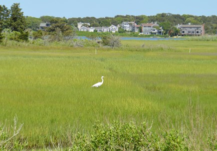 Chatham (Ridgevale Beach area) Cape Cod vacation rental - Heron sighting on way to Ridgevale (you'll see lots!)