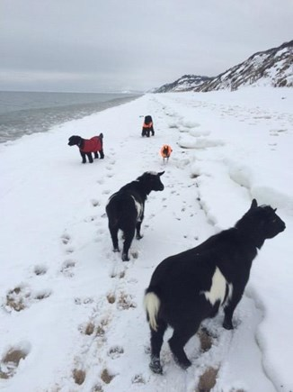 Truro Cape Cod vacation rental - Winter walk to Ryder Beach..no humans in sight!