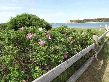 Chatham Cape Cod vacation rental - Private Association Beach Down the Street Also Available.