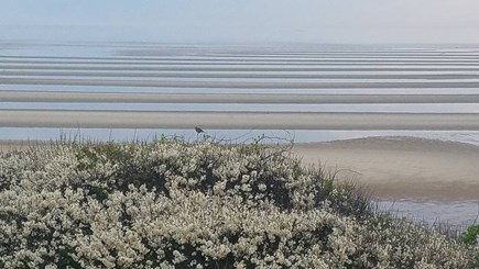 Eastham Cape Cod vacation rental - Bay Side Beach Eastham