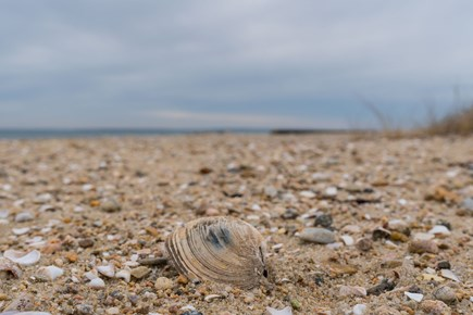 East Falmouth Cape Cod vacation rental - Find shells on the shore of Great Pond