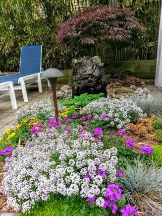 Provincetown, Cape 50 Cape Cod vacation rental - Flowerbeds