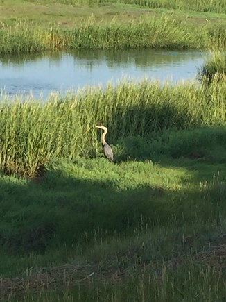 Eastham Cape Cod vacation rental - Tidal marsh in front of house