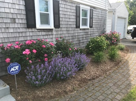 Yarmouth Cape Cod vacation rental - Smell the Roses!