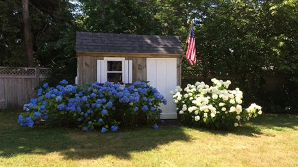 Chatham Cape Cod vacation rental - Lots of Blooms around the property.