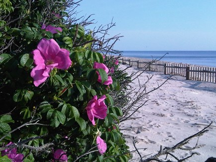 Truro Cape Cod vacation rental - Nearby Corn Hill Beach on the Bay