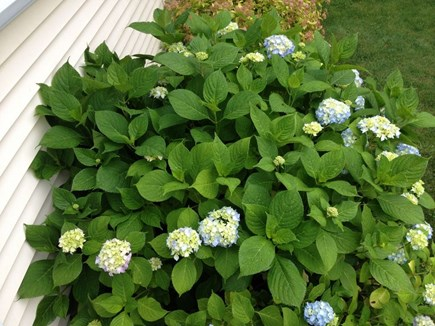 West Harwich Cape Cod vacation rental - Nice landscaping