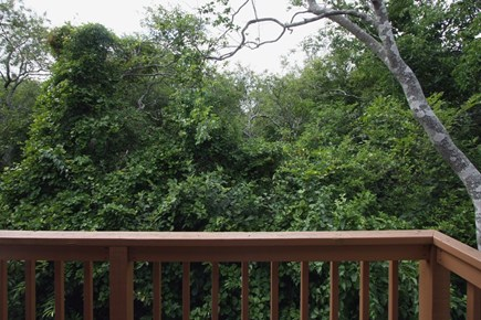 Provincetown Cape Cod vacation rental - Enjoy the dune forest view with your morning coffee from the deck