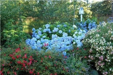 Brewster Cape Cod vacation rental - Some of the gardens