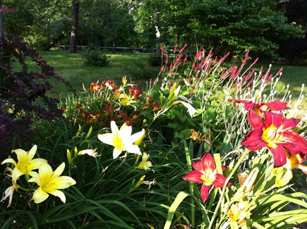 Brewster Cape Cod vacation rental - All sorts of flowers!!