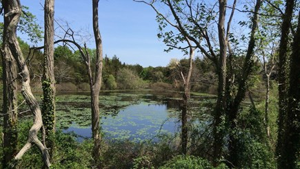 Orleans Cape Cod vacation rental - Pond across from house