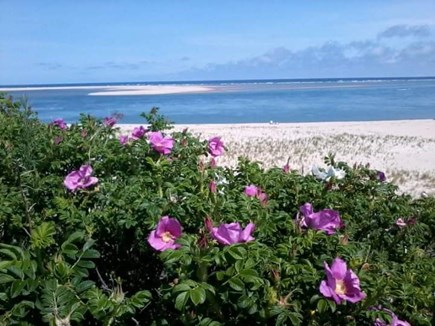 CHATHAM Cape Cod vacation rental - Chatham Lighthouse Beach is a 20 minute walk.