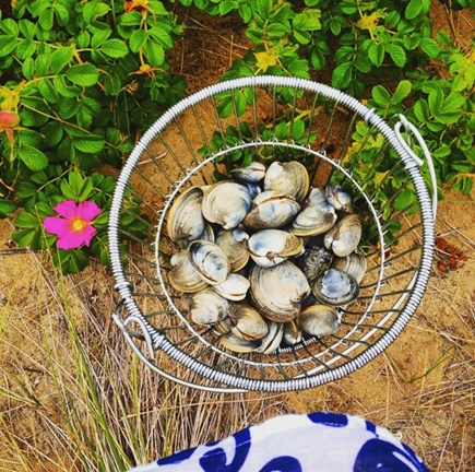 South Yarmouth Cape Cod vacation rental - Clamming at low tide