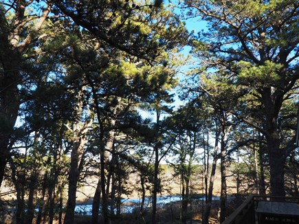Indian Neck, Wellfleet Cape Cod vacation rental - The view from the front porch