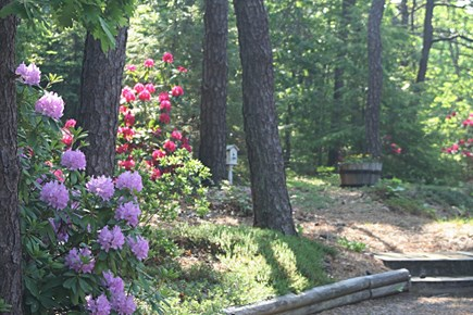 Eastham Cape Cod vacation rental - Great outdoor space