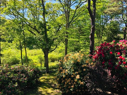 Brewster Cape Cod vacation rental - View of back yard into the nature preserve