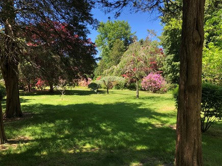 DENNIS Cape Cod vacation rental - Manicured landscape lawn with ornamental trees.