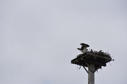 Onset MA vacation rental - Osprey Nest on Beach