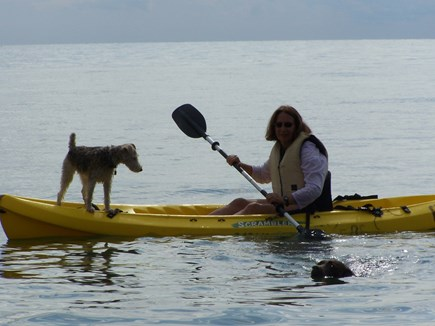 Truro Cape Cod vacation rental - Kayaking on Bay with our sea-going Wire Fox Terrier