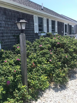 North Truro Cape Cod vacation rental - Our Beach Cottage