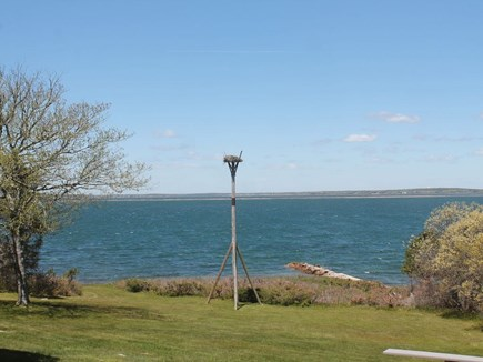 Bourne, Pocasset Cape Cod vacation rental - Maybe you'll catch a glimpse of the Ospreys!