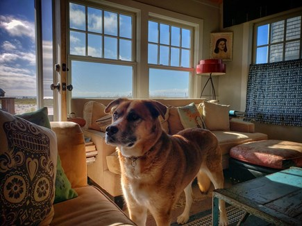 North Truro Cape Cod vacation rental - Dog