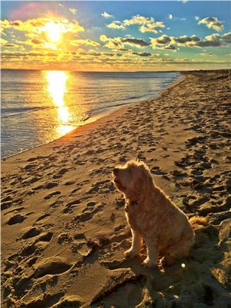 New Seabury (Mashpee) New Seabury vacation rental - Our dog Sadie on the beach. Dogs are considered.